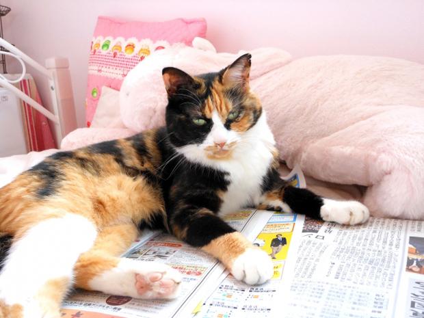 猫 紙 食べる