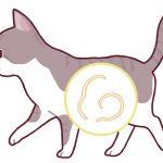 猫 コクシジウム 消毒