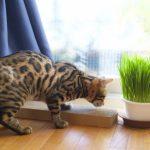 猫 草を食べる理由
