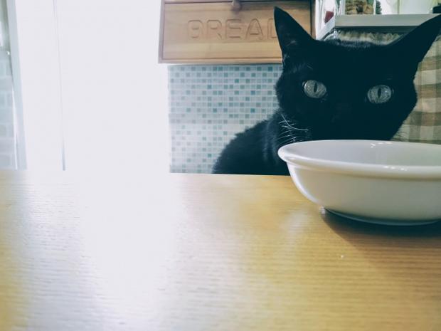 猫 異物を食べる
