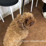 犬 高脂血症 治療 薬
