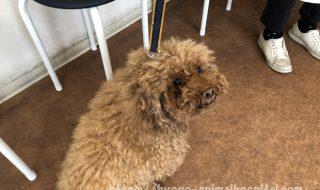 犬 クッシング症候群 末期症状