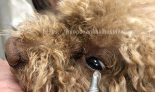 犬 目薬 軟膏