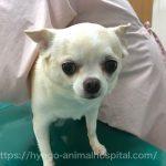 犬 高脂血症 症状
