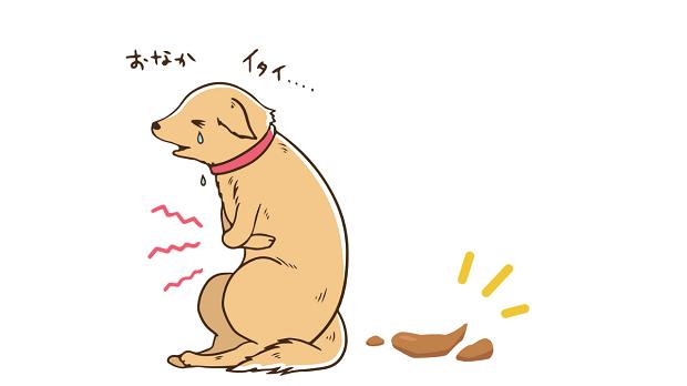 犬 下痢 原因