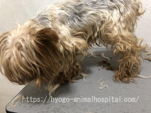 犬 インスリノーマ 症状