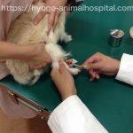 犬 クッシング症候群 糖尿病