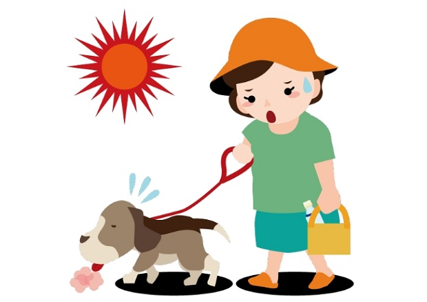 犬 熱中症 予防