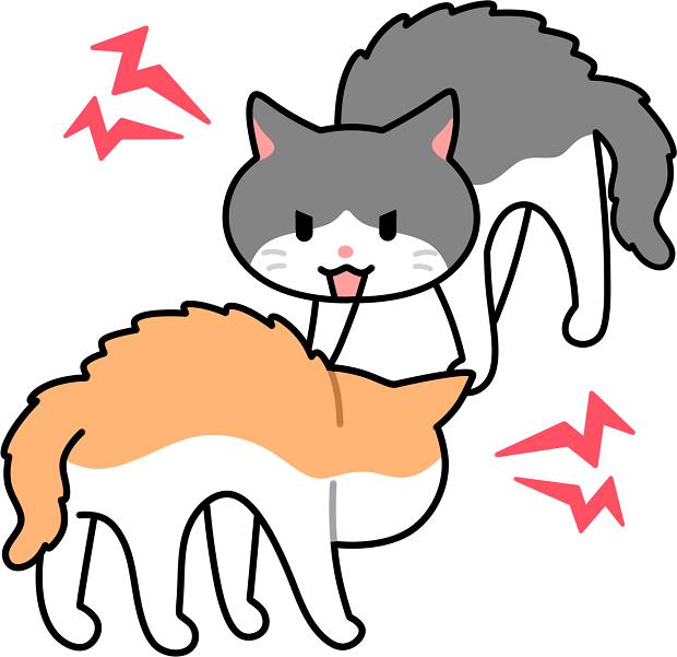 猫同士の喧嘩